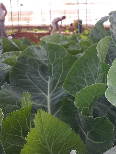 Flores y verduras ecológicas en el Polígono Sur de Sevilla